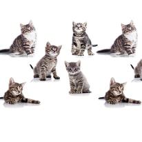 Tenda doccia Kitten L 180 x H 200 cm