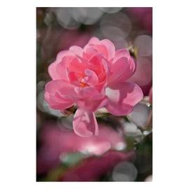 Fotomurale Bouquet multicolor 254 x 184 cm
