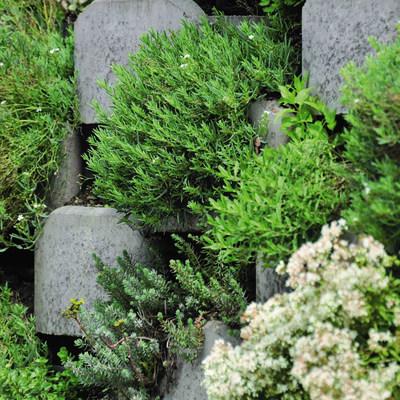 Bancale da 27 pezzi muretto Green mini in cemento